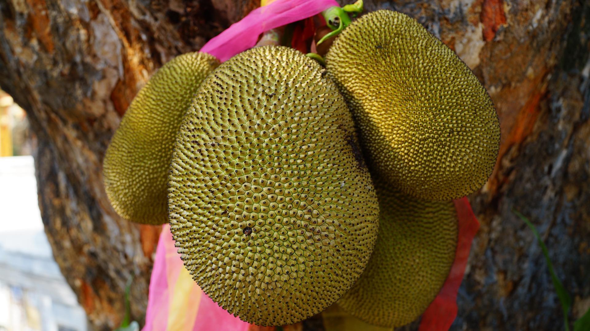 jackfruit-1087108_1920