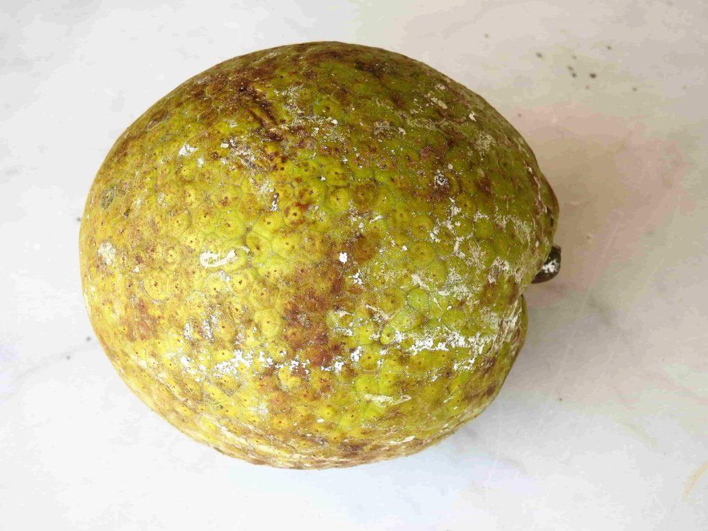 Whole Breadfruit, A Nourishing Tropical Fruit Related to Jackfruit